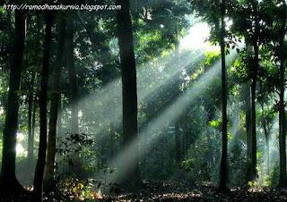 Contoh Puisi Tentang Lingkungan Hidup