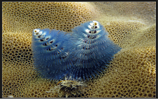 cool biodiversity photos, photo images, nature, conservation, coral