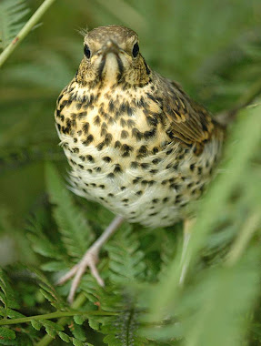 Visit a blog with daily updates on UK wildlife