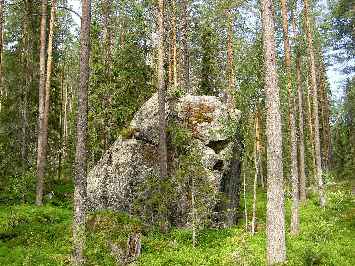 Häftig sten i Övsjöskogarna