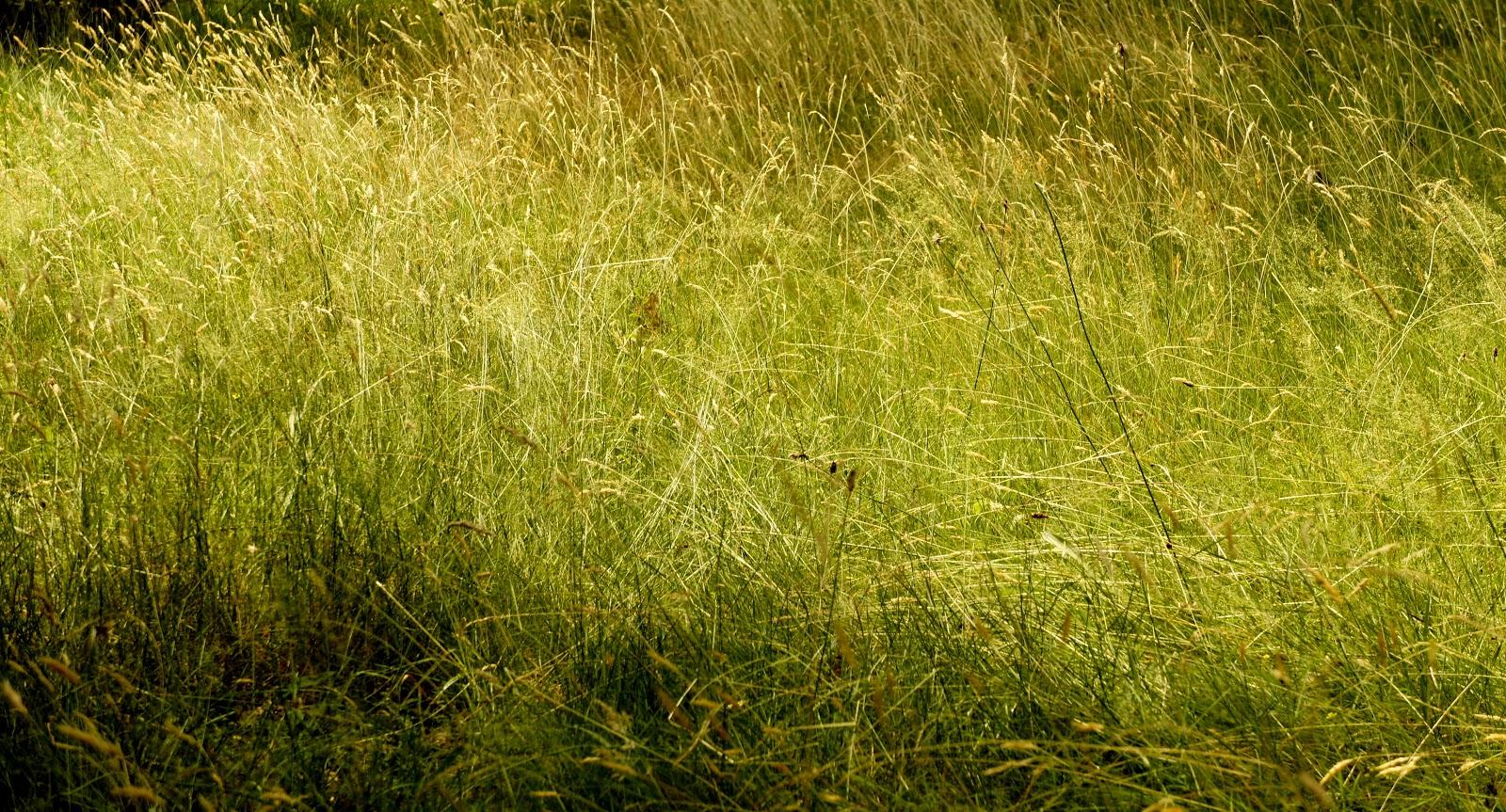 Zed l 39 pine zed l 39 pine a d 39 la peine snif - Herbe a chat seche ...