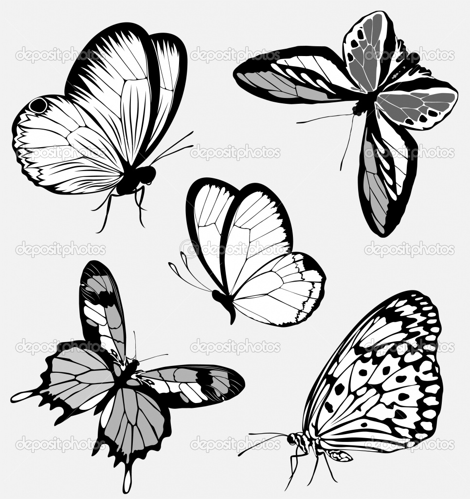 Line Drawing Butterfly Tattoo : Hình xăm hoa văn bướm butterfly tatttoo nghệ thuật