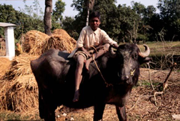 hindu singles in las marias Meet single men in las marias pr online & chat in the forums dhu is a 100% free dating site to find single men in las marias.