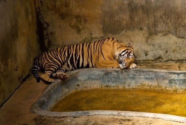 la vida real de los animales en los zoológicos.