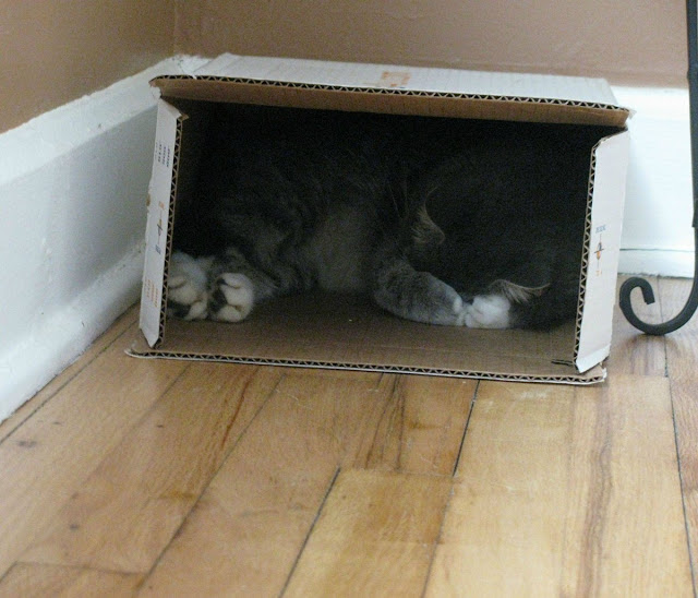 Funny cat pictures part 14, cat sleeps in box covering face with paws