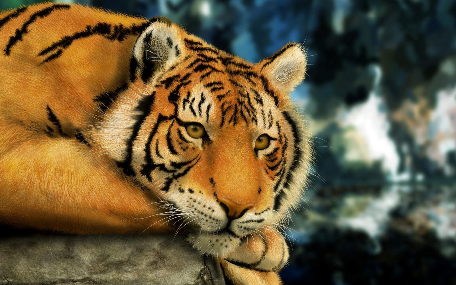 sad bengal tiger hd wallpaper   windows 8 hd wallpapers