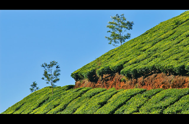 best tour deal in munnar. tourist can make tour self.We will arrange resource as per tourist requirement