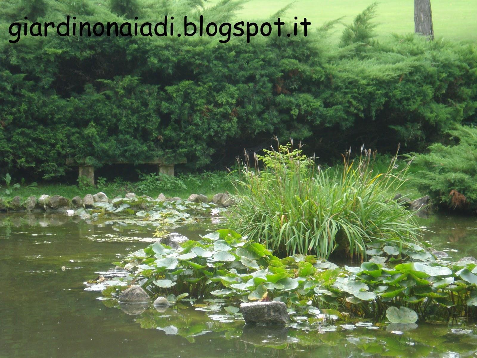 Il giardino delle naiadi un laghetto naturale for Animali laghetto