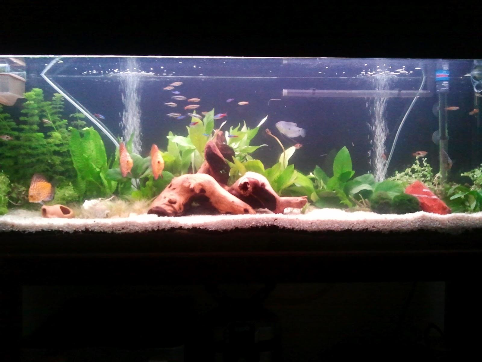 C mo fabricar una urna para nuestro acuario portalpez for Todo para acuarios