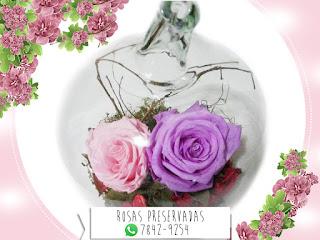 Rosa Preservada Natural ¡Duran más de 4 Años!