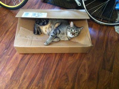 Kuma-cardboard-bed01