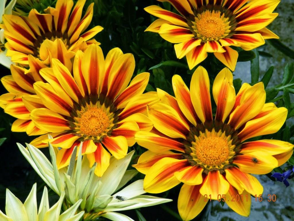 Arte y jardiner a plantas vivaces para zonas umbr as - Plantas para arriates ...