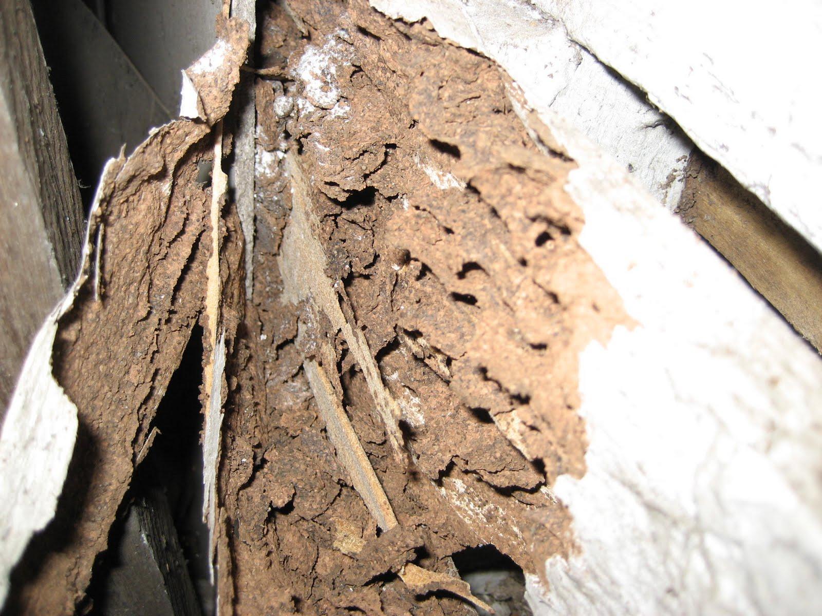 Termite Inspection Annual Termite Inspection Cost