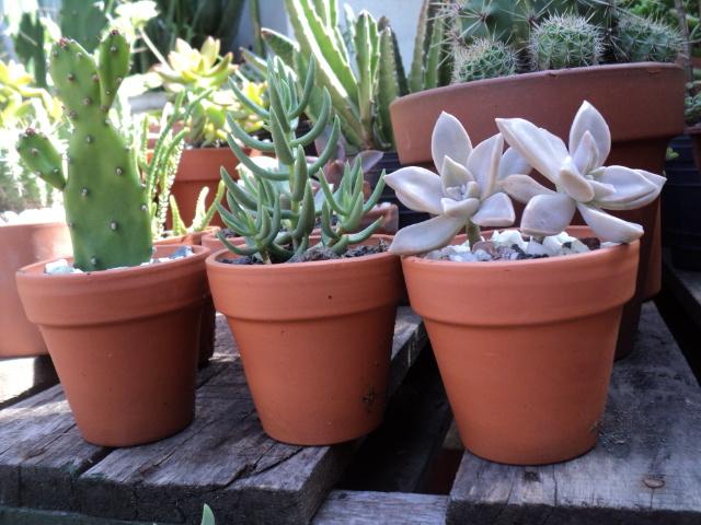plantas morenal: presentaciones