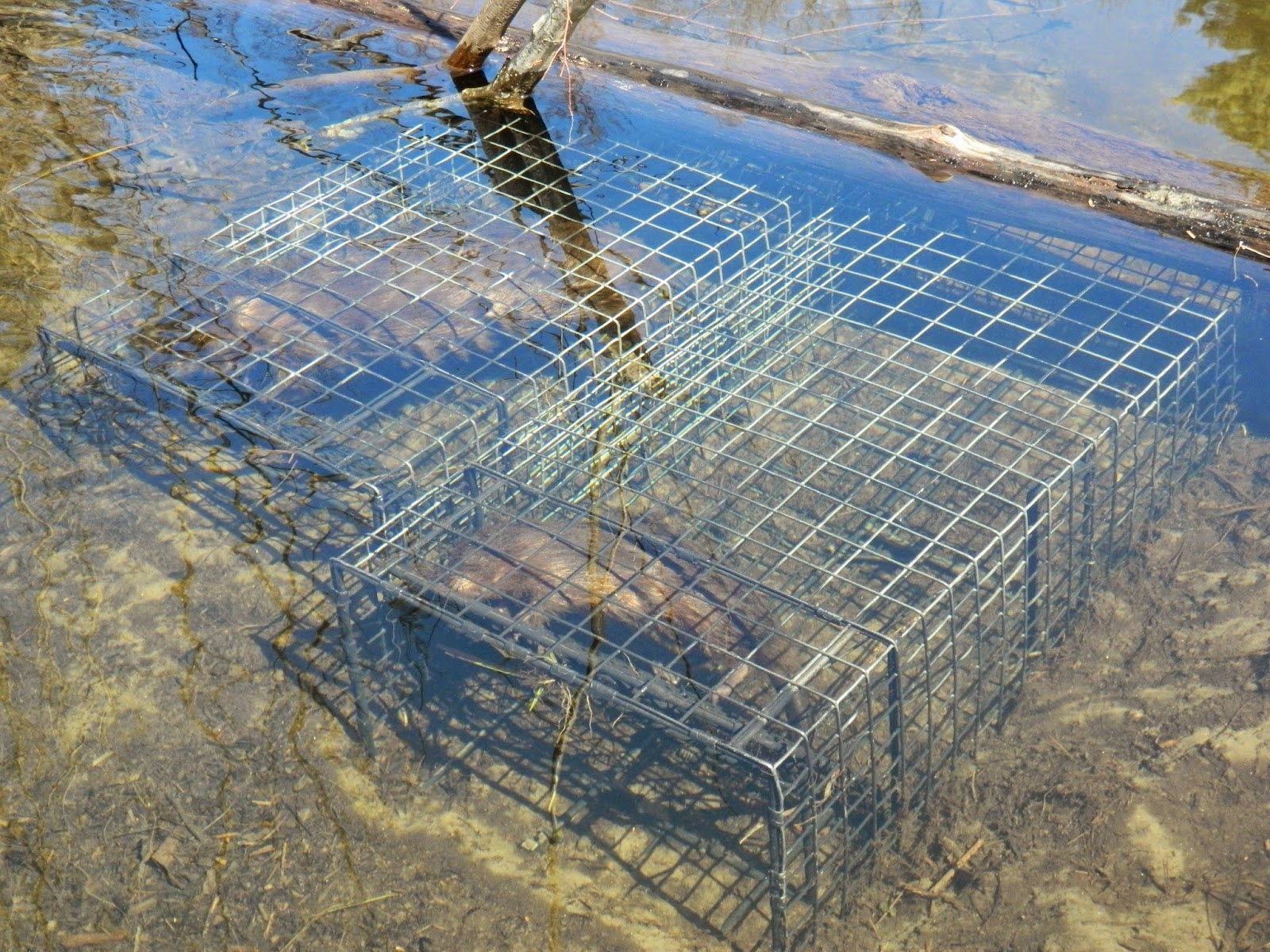 How to Catch Beavers