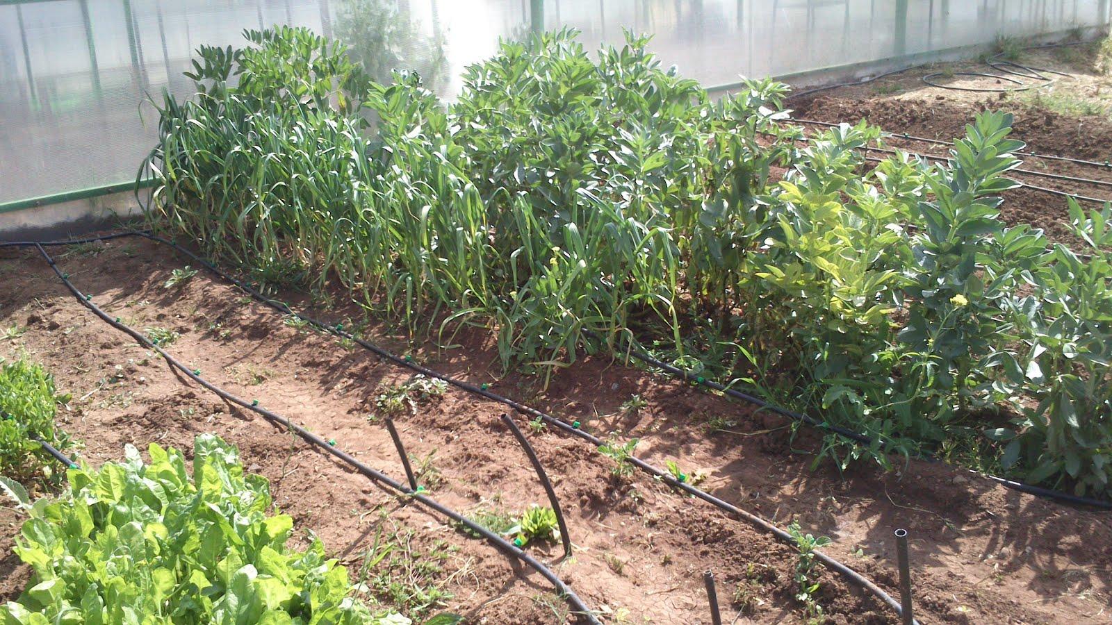 Huerineco instalando el sistema de riego por goteo for Riego por goteo pistachos