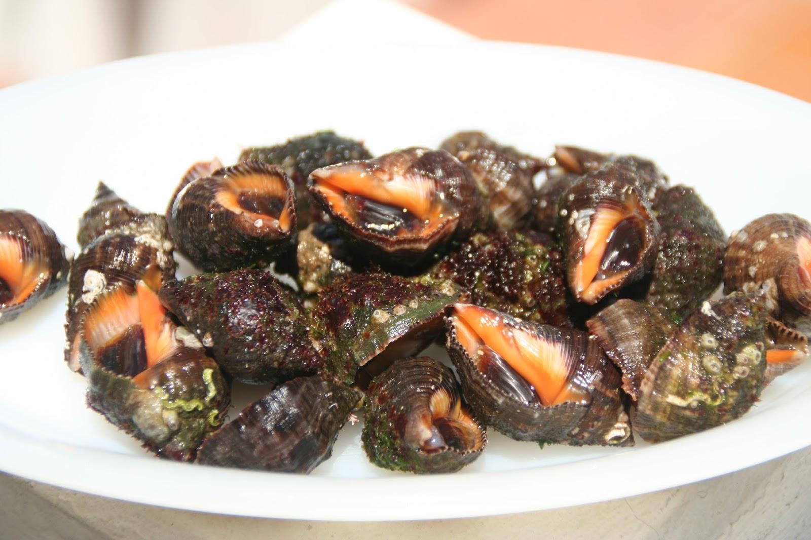 Como Cocinar Caracolas De Mar   La Libreta De Recetas Caracoles De Mar