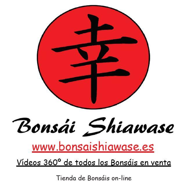 Bonsái Shiawase