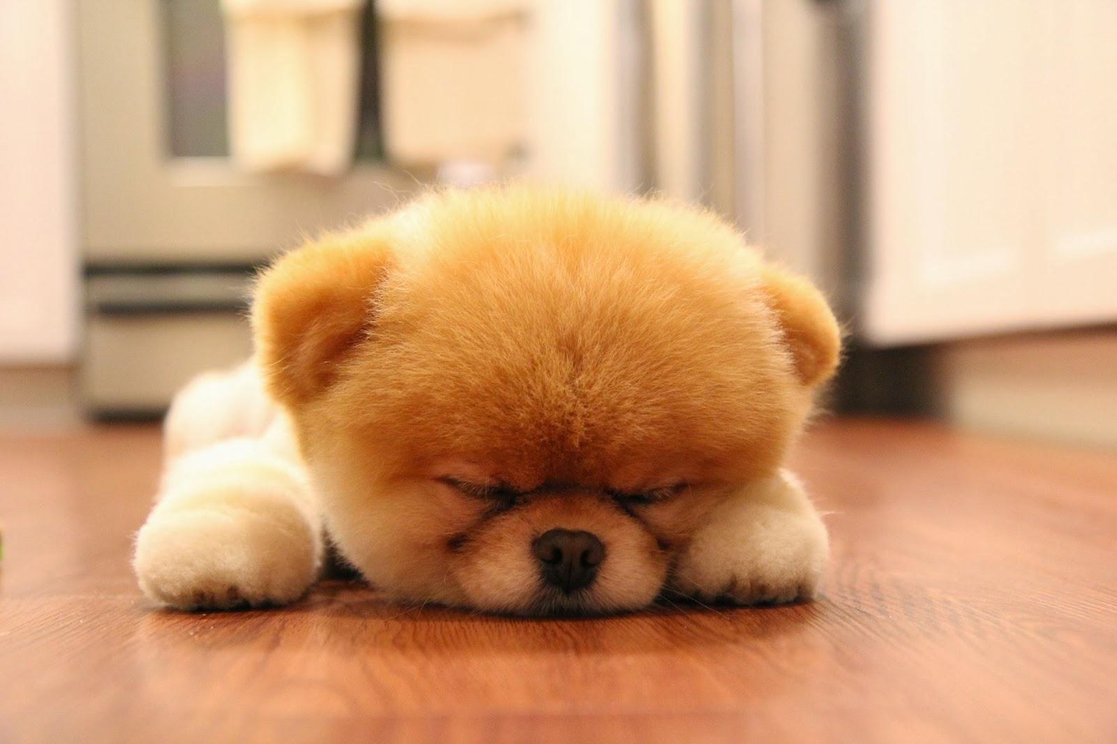 Sleeping Puppies Wallpapers Free HD Desktop Download