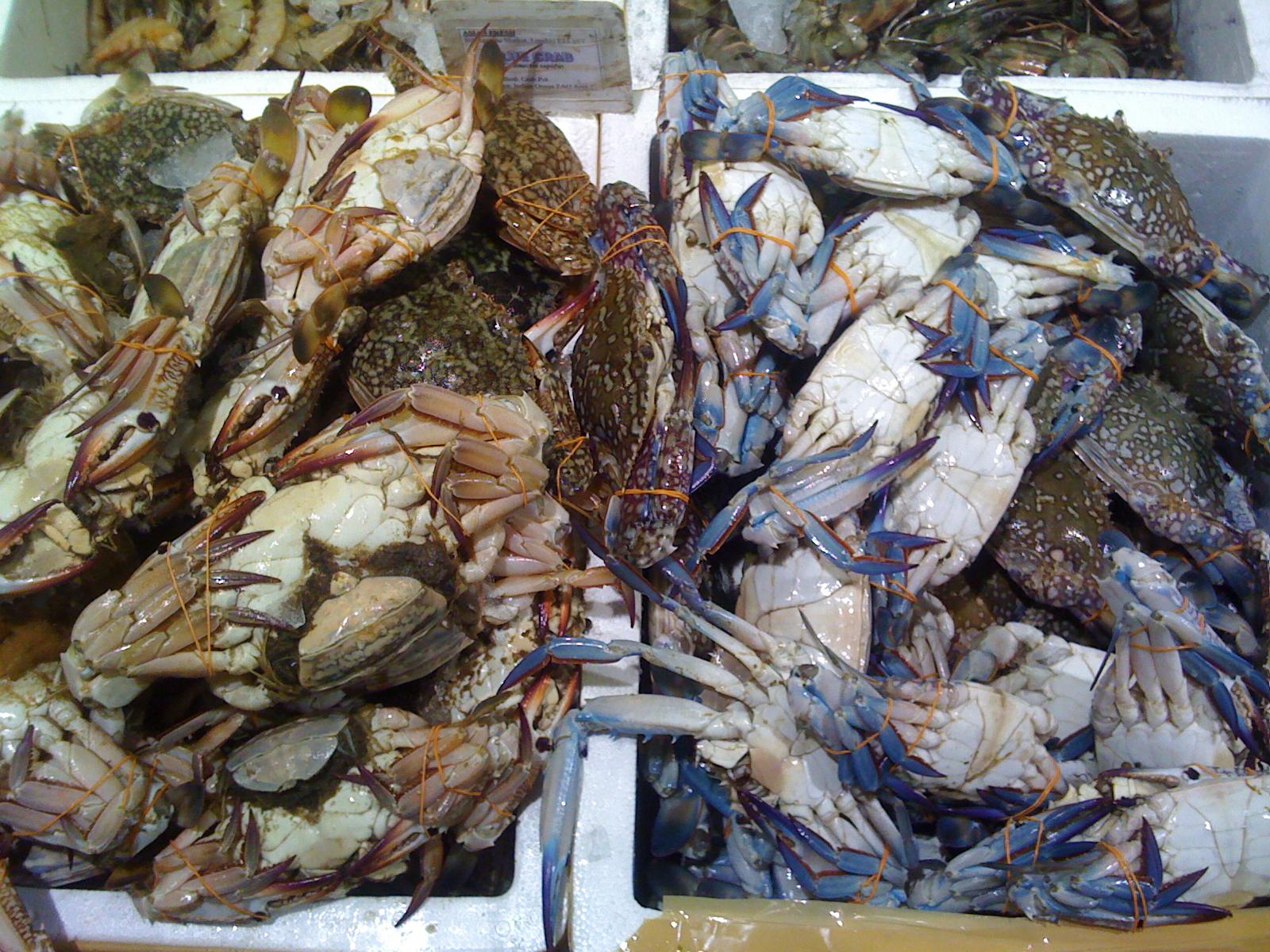 Wai vi ki billingsgate fish market for King fish market
