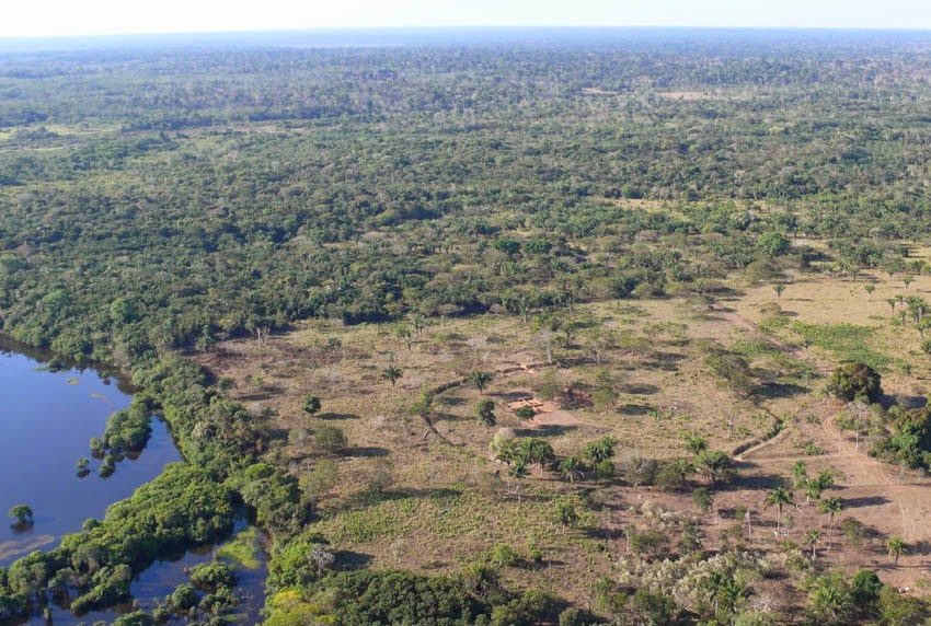 'Amazonian savannah' supported ancient civilizations before rainforest took over