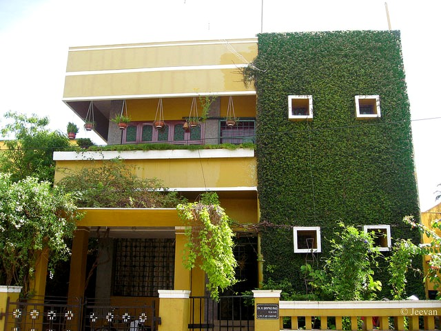 Jardines verticales muros verdes paredes vegetales - Plantas trepadoras para muros ...