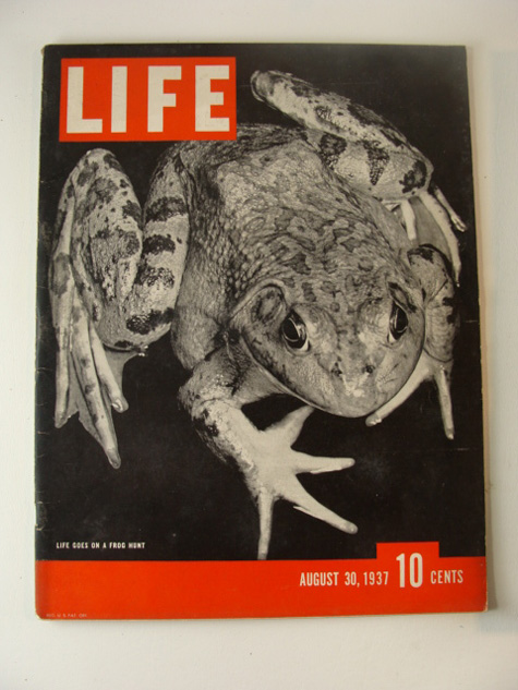 Life Frog Cover