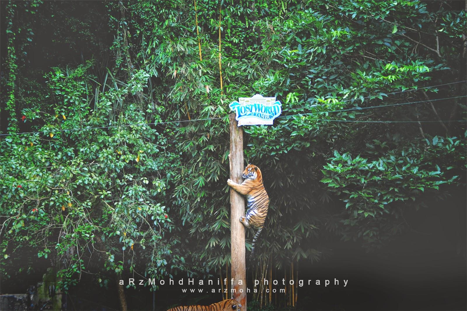 tiger, harimau, tips, vmy2014, jom cuti, visit malaysia 2014, gambar cantik