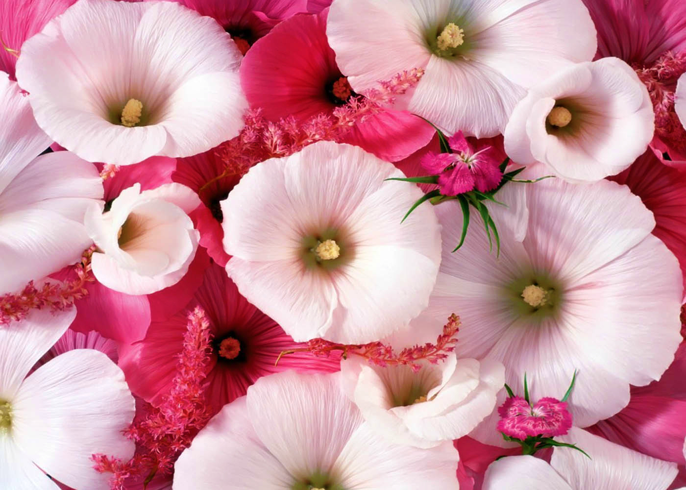 Sweet Flowers Delights Most Beautiful Flower Wallpapers