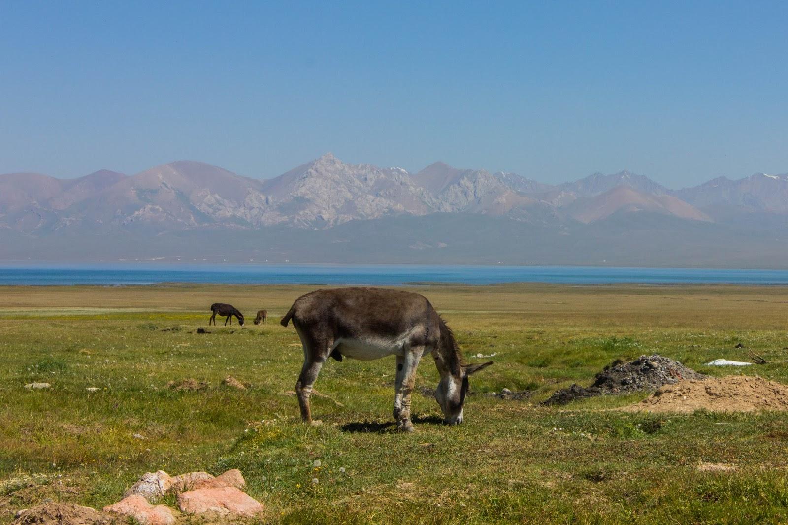 Кыргызские горы, Сон-куль