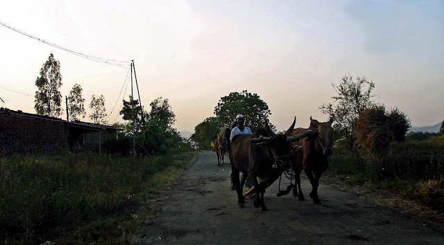 bullock cart in the country-side