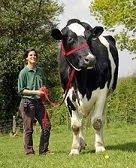 Maior Vaca