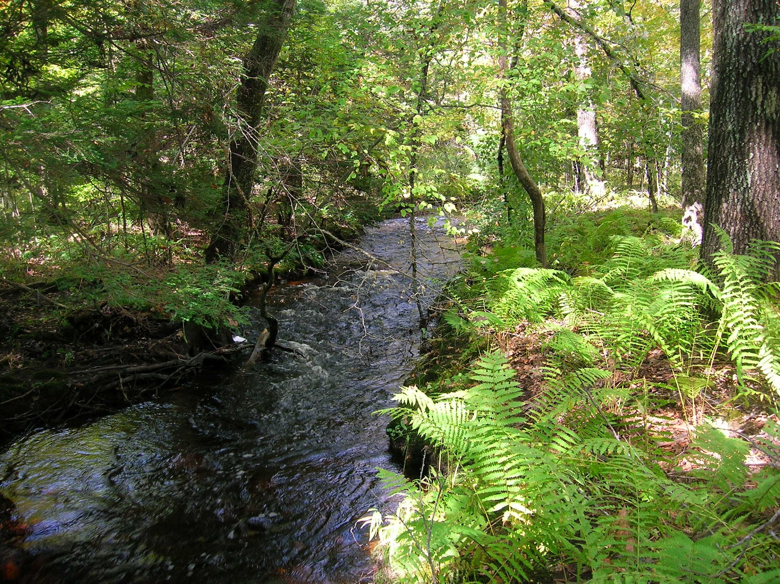 <b>Stream In The Woods</b> Free Stock Photo - Public Domain Pictures
