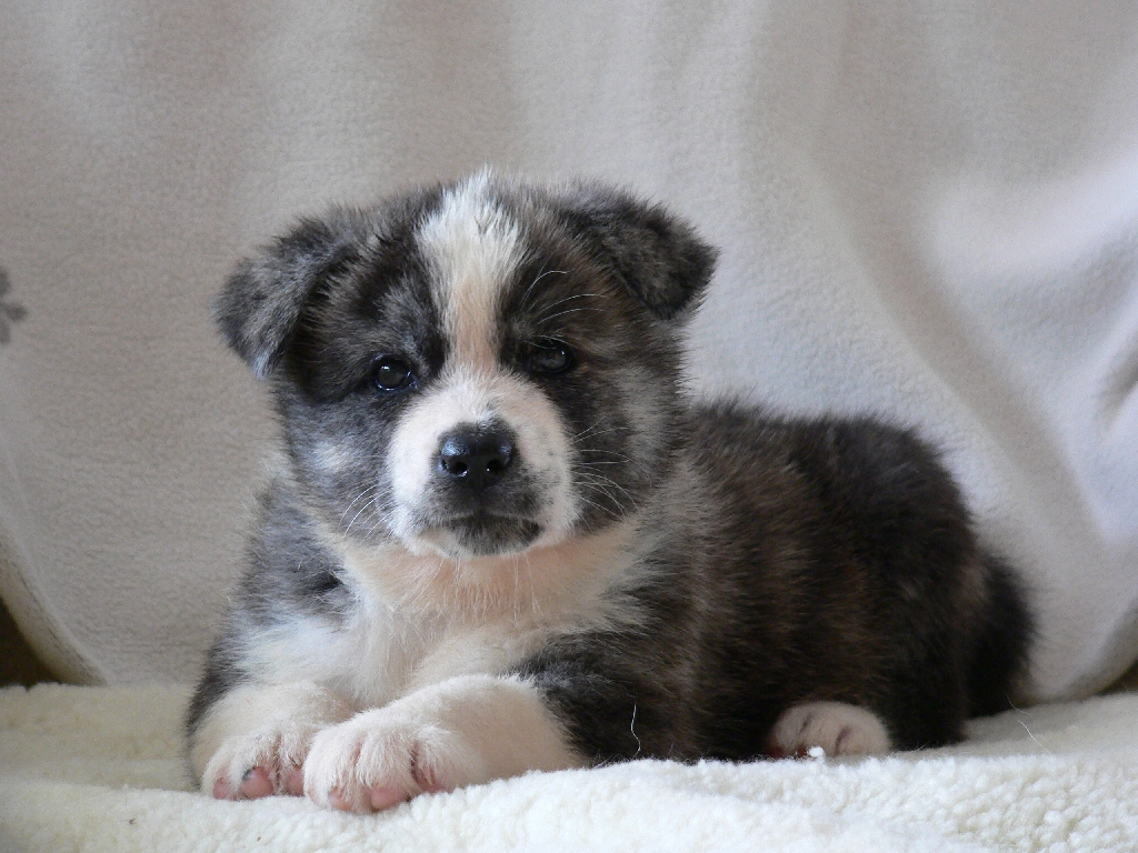 Akita Dog, Adorable Animals, Akita Inu, Dogs Puppies, Puppies Photos