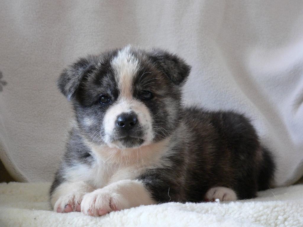Akita Dog, Adorable Animals, Akita Inu, Dogs Puppies, Puppies Photos