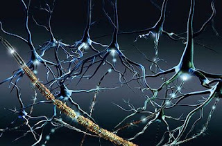 Resultado de imagen de La conciencia y la memoria conforma un inmenso entramado de conexiones que se desarrolla durante nuestras vidas