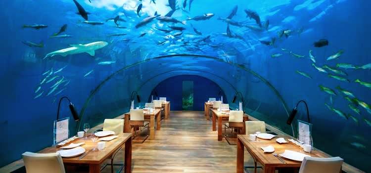TripAdvisor.com cites Ithaa Undersea Restaurant of Conrad Maldives among 10 fabulously quirky restaurants