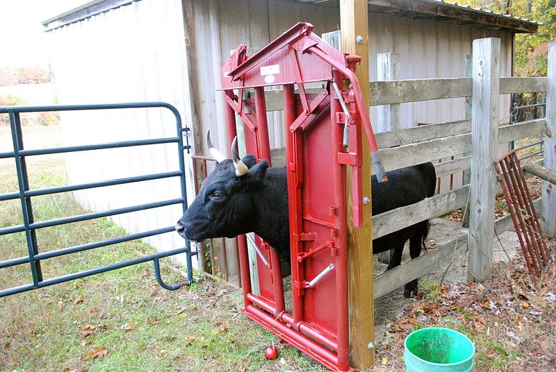 cattle head gate plans