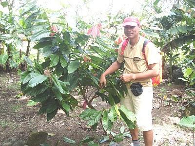 Agriculture aztec agriculture