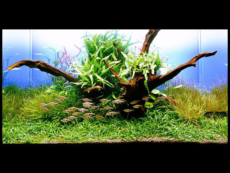 la vie de mon aquarium aquascaping