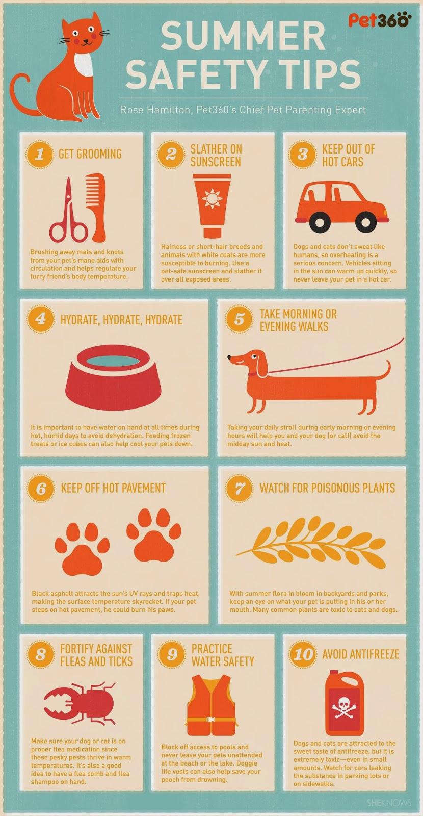 Best Dog Sunscreen