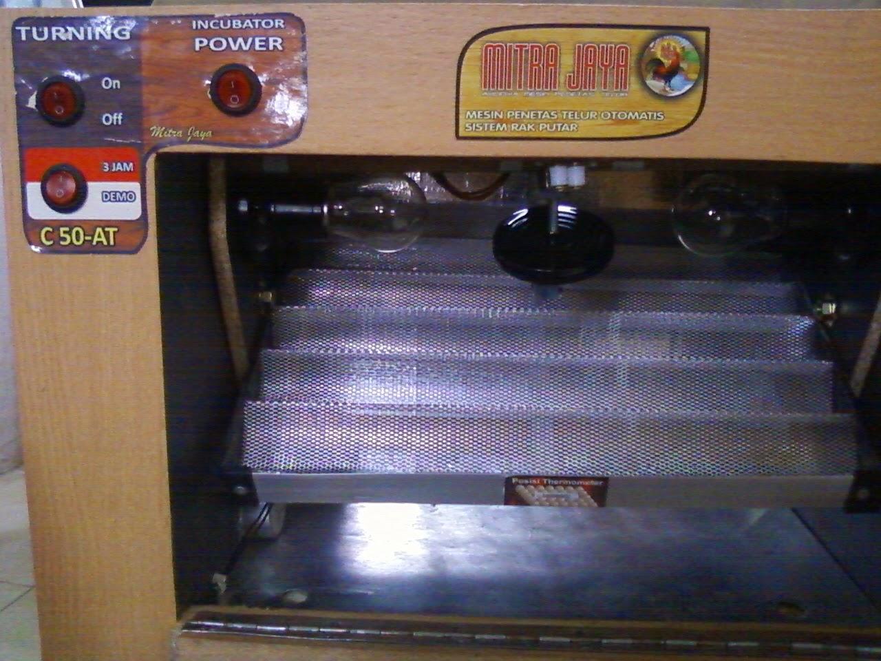 Cari Penetas Telur Ayam Kate Di Surabaya