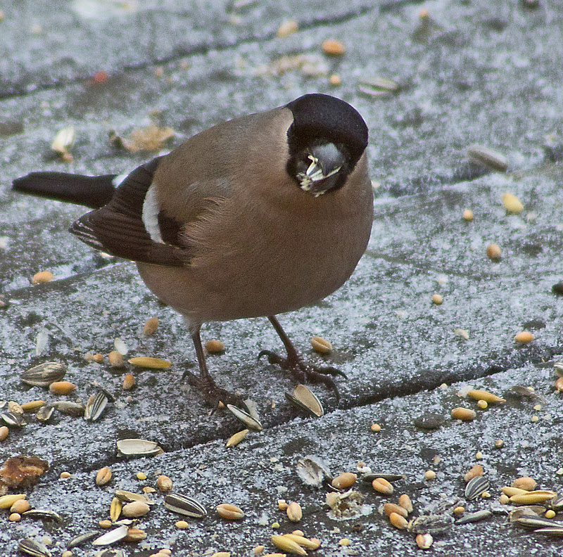 hvilken fugl er det