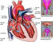 Chế độ ăn uống, kiêng kị cho người bị mắc bệnh Tim mạch