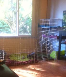diy bunny cage inside