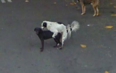 foto rara google street view