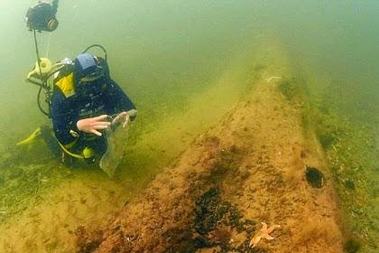 Hutan Kuno Berumur 10.000 Tahun Ditemukan di Dasar Laut