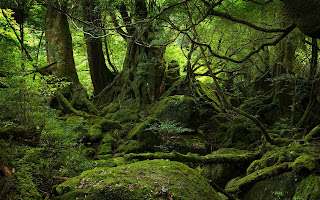 Moss Covered Tree Jungle Forest HD Wallpaper