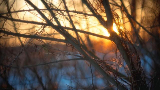 Branches Winter Light HD Wallpaper