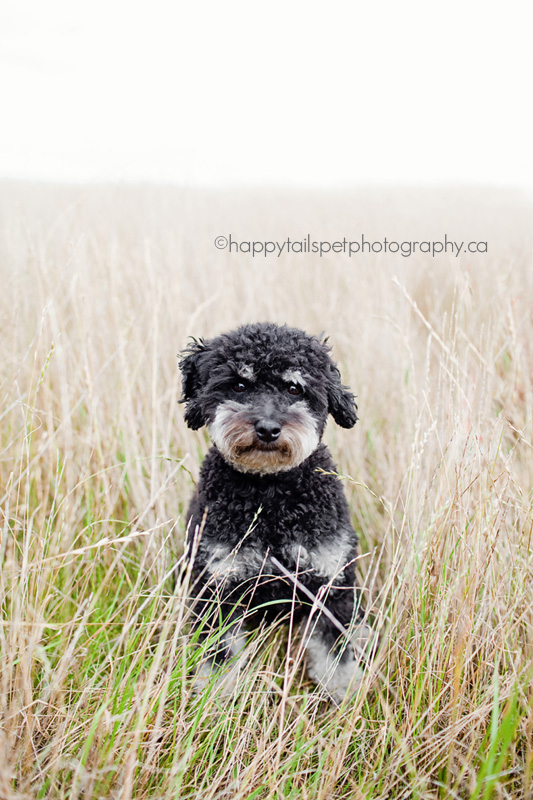 Charlie sits in the long grasses in Burlington's City View park.